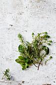 Thyme, sorrel, rosemary and oregano