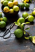 Zitronen, Limetten und Kaffirlimetten