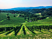 The hilly landscape of South Styria, Austria