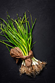 Fresh red and white onions on dark background