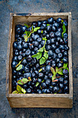 Freshly picked blueberries in a wooden crate