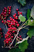 A sprig of redcurrants