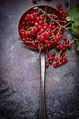 Fresh redcurrants on a draining spoon