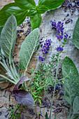 Lavender and fresh kitchen herbs