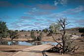 Kalahari after the rains