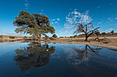 Kalahari after the rains