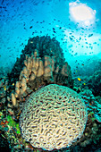 Hard corals and sunburst, Apo Island, Philippines