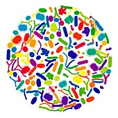 Microbes, illustration