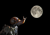 Snail and moon