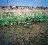 Land and water pollution
