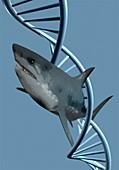 Shark DNA, illustration