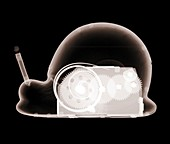 Toy mechanical snail, X-ray