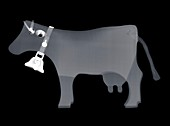 Toy cow, X-ray