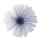 Flower, X-ray