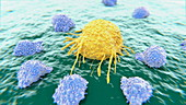 Lymphocytes attacking a cancer cell, animation
