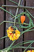 Wandbehang mit Rosen und Chinaschilf gestalten: Kranz aus Blütenblättern und Chinaschilf, Lampionfrucht als Deko