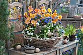Osterkorb mit Primel 'Goldnugget Apricot', Lungenkraut 'Trevi Fountain' und Traubenhyazinthe 'White Magic', Osterhasen und Ostereier