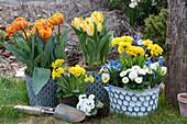 Frühlings-Arrangement mit Tulpen, Primeln, Tausendschön, Traubenhyazinthe, Blausternchen und Hornveilchen