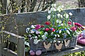 Korbkasten mit weißer Schachbrettblume, Traubenhyazinthen, Ranunkeln, Milchstern, Hornveilchen und Tausendschön österlich dekoriert mit Ostereiern und Holzhähnchen