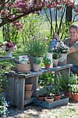 Blühender Schnittlauch, Hornveilchen und Jungpflanzen von Kapuzinerkresse, Tomaten und Paprika, Frau gießt Hornveilchen