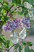 Kleine Vasen mit Fliederblüten an Baum gehängt