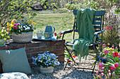 Kleine Kiesterrasse im Garten,Gefäße mit Hornveilchen, Wildtulpen, Tulpen Traubenhyazinthen, Primeln, Ranunkeln, Vergißmeinnicht, Stuhl mit Decke