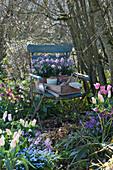 Holzkiste mit Utensilien zum pflanzen und Goldlack Poem 'Lavender' in Töpfen auf Stuhl im Garten