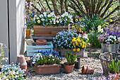 Terrasse mit Hornveilchen, Stiefmütterchen, Vergißmeinnicht, Traubenhyazinthen, Primel Belarina 'Mandarin', Tausendschön, Goldlack und Moossteinbrech