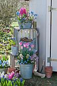 Töpfe mit Hyazinthen, Tulpen, Traubenhyazinthen, Moossteinbrech und Hornveilchen, Regal aus Holzkisten