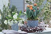 Tulpe 'Orange Princess' und Milchstern in Zinktöpfen, Kranz aus Weidenkätzchen