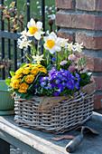 Bunter Frühlingskorb mit Blaukissen, Primel Belarina 'Mandarin', Narzissen 'Sempre Avanti' 'Toto', Hyazinthe und Tausendschön
