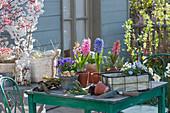 Zutaten für die Osterterrasse : Hyazinthen, Hornveilchen, Blaukissen, Korb mit Ostereiern, Steckzwiebeln, Rinde und Glas mit Schneckenhäuschen