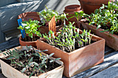 Gemüse und Blumen Jungpflanzen