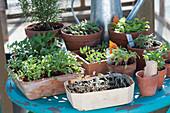 Gemüse und Blumen Jungpflanzen auf Tisch im Wintergarten