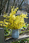 Strauß aus Zweigen vom Goldglöckchen auf Bank im Garten