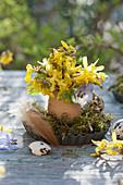 Kleiner Osterstrauß aus Zweigen von Goldglöckchen und Hornveilchen-Blüte in Ei als Vase auf Moos in Backförmchen