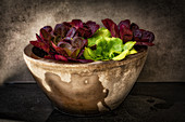 Various lettuces in a stone bowl