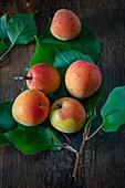 Wachauer Marillen (Wachau apricots) with leaves