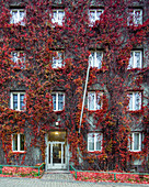 A house facade covered in vines in the Kivelänkatu neighbourhood, Helsinki, Finland