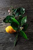 Zitrone mit Zweig