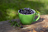 Bilberry in green cup on the wood