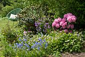 Beet mit Rhododendron 'Polaris', Beinwell, Hasenglöckchen, Pfingstrose und Silberblatt