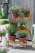 Blumentreppe mit Nelken Summer Diamonds 'Dark Red', Rosmarin, Salbei, Thymian und Jungpflanzen von Kapuzinerkresse