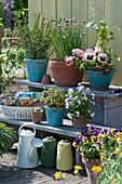 Töpfe mit Stiefmütterchen, Schnittlauch, Rosmarin, Knoblauchsrauke, Hauswurz, Hornveilchen und Thymian auf Blumentreppe, Tablett mit Samentüten
