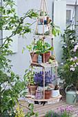 Selbstgebaute Etagere aus Birkenscheiben: Töpfe mit Katzenminzem Kapuzinerkresse, Tomate, Utensilien und Garnrollen