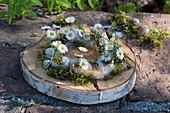 Kränzchen auf Birkenscheibe gelegt mit Moos und Gänseblümchen mit Berufskraut in leeren Schneckenhäuschen