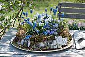 Traubenhyazinthen, Hornveilchen und Strahlenanemone in Kranz aus Moos, Birkenrinde und Gras, Weidenzweige herumgelegt