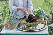 Frau füllt Erde in Kranz aus Moos, Birkenrinde und Gras, Weidenzweige herumgelegt, Töpfe mit Traubenhyazinthen und Hornveilchen