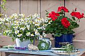 Ländliches Arrangement mit Zweizahn 'Bee White' und roter Geranie, kleine Kränzchen aus Gräsern und Sträußchen aus Schnittlauchblüten