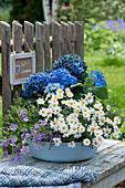 Schale mit Hortensie, Margerite, blaues Gänseblümchen und Thymian, Schild am Zaun: Willkommen